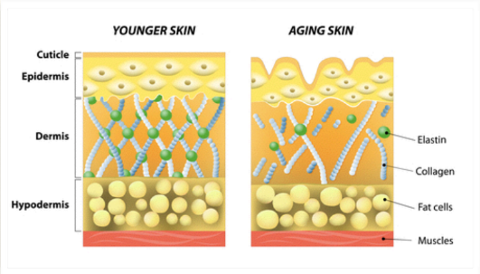 Young skin old skin